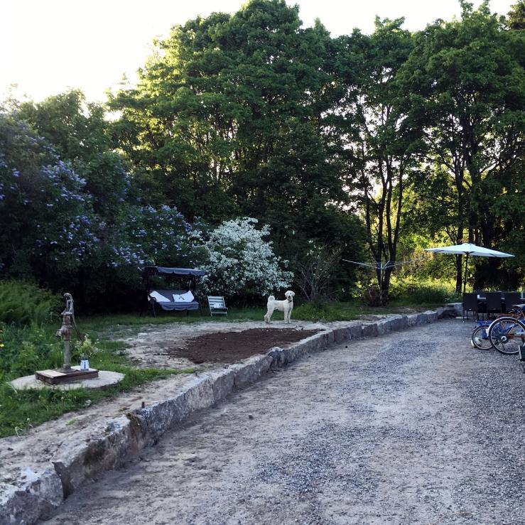 stenkantträdgård